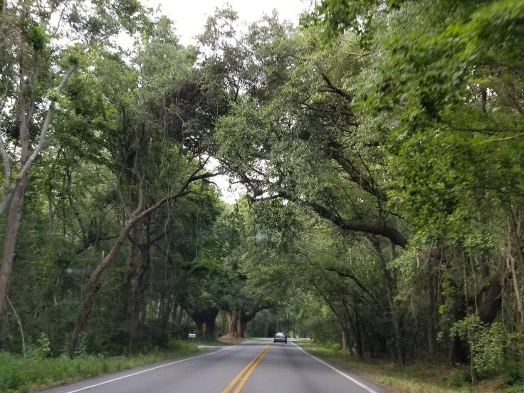 the road.jpg