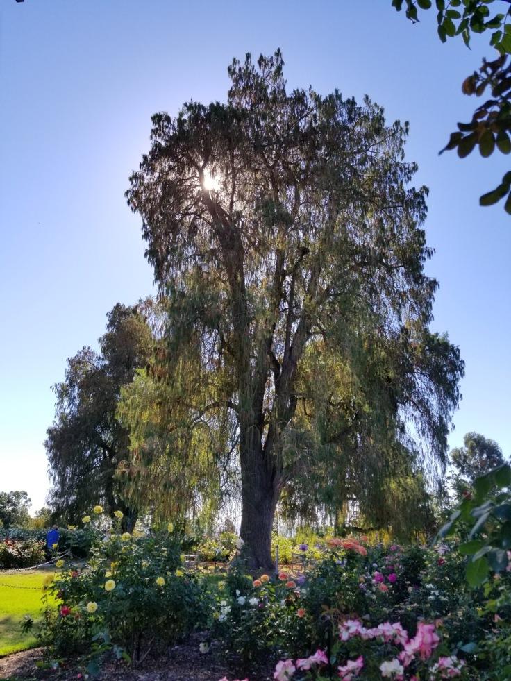 LAbeautytree